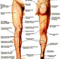 Скелет человека с названием костей нижних конечностей