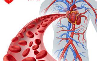 Какие препараты улучшают кровообращение