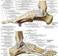 Голеностопный сустав кости