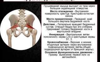Анатомия грушевидная мышца