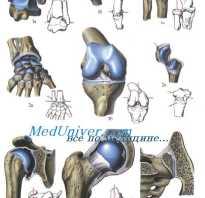 Таблица суставов человека