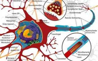 Рассеянный склероз виды