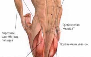 Болит тонкая мышца бедра