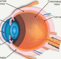 Почему появляются мушки в глазах