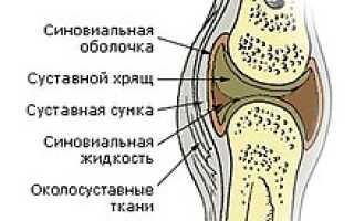 Крупные суставы человека