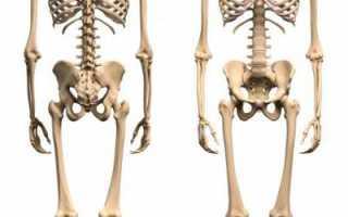 Нижняя конечность человека