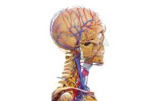 Как лечить гипоплазию правой позвоночной артерии
